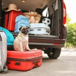 Get Suitable Options Meeting your Specific Needs with Pet Relocation SG