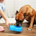 Step to take care of your pets