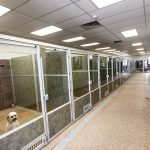 Want To Start A New Dog Boarding Facility? Don't Miss These Aspects!