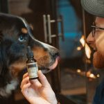 Saving Grace CBD: How your Dog can Benefit from CBD