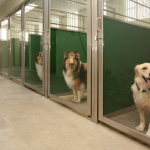 5 Factors To Consider Before Starting A Dog Boarding Facility