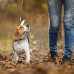 How to Find the Best Charlotte Dog Walking Services?